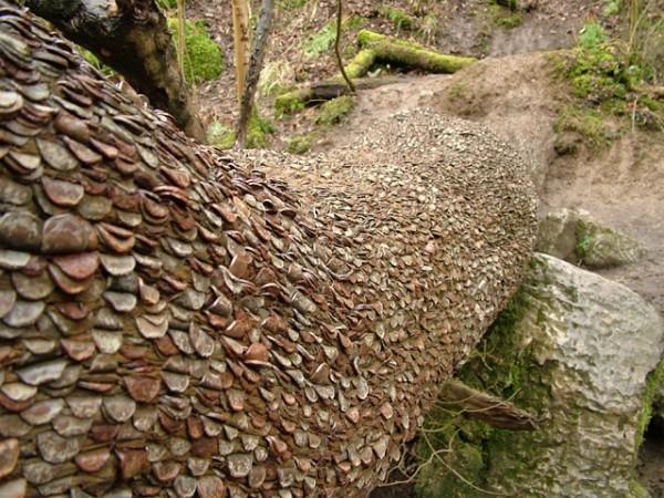 Money Trees Striking Imagination
