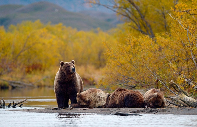 On the Land of Bears