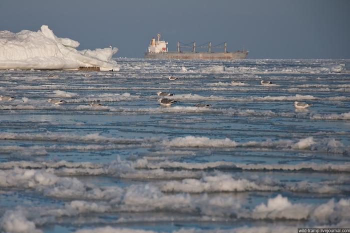The Day When Odessa Bay Got Frozen