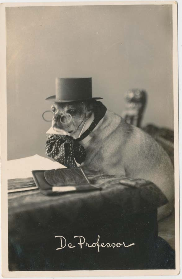 Retro Photos of Animals