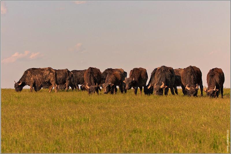 Rostov Steppe Safari