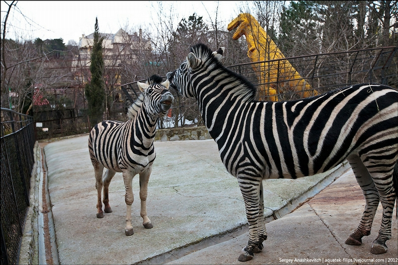 Yalta Zoo Skazka