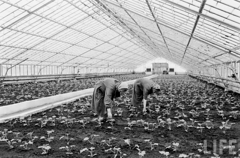 Soviet Farming In Pictures