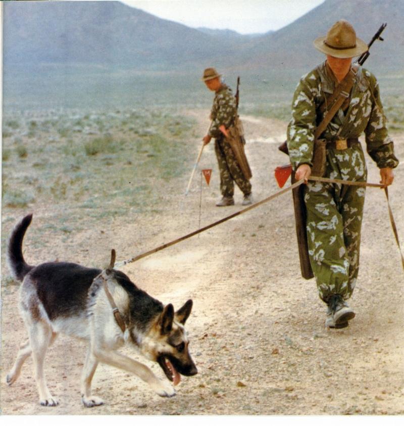 афгане картинки