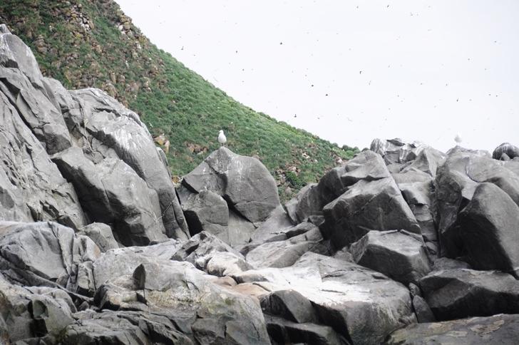 The Island of Birds