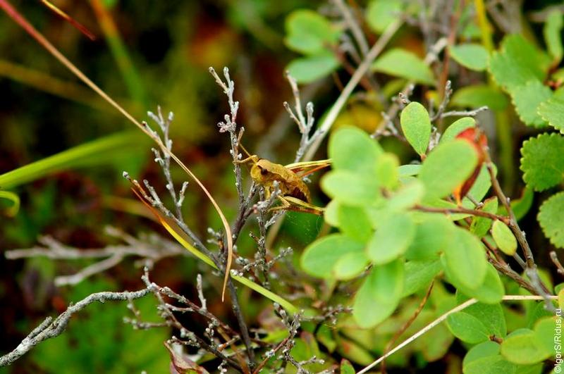 有很多吸浆虫和其他昆虫如甲虫,蜜蜂,蝗虫。