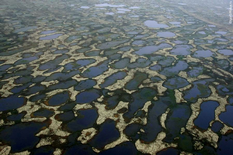 Nature of the Wild Polar Land