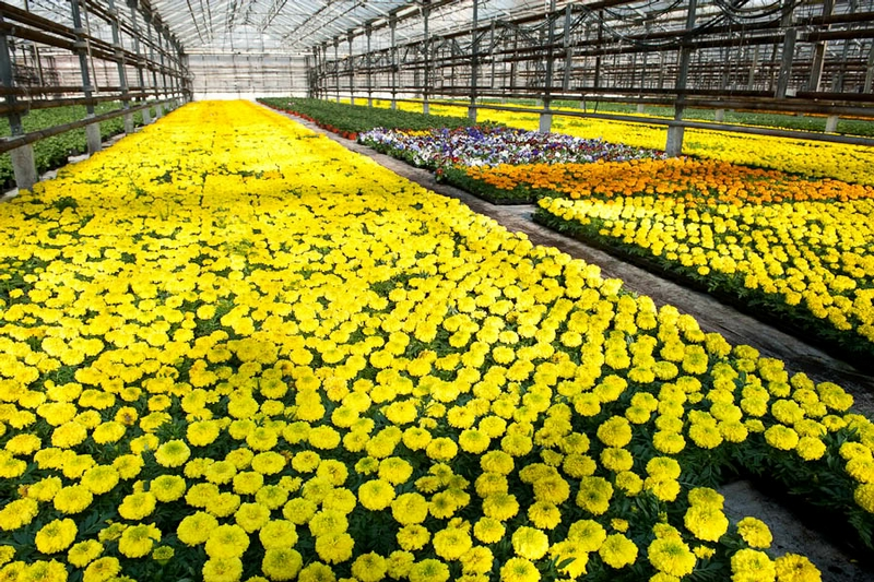 Territory of Flowers