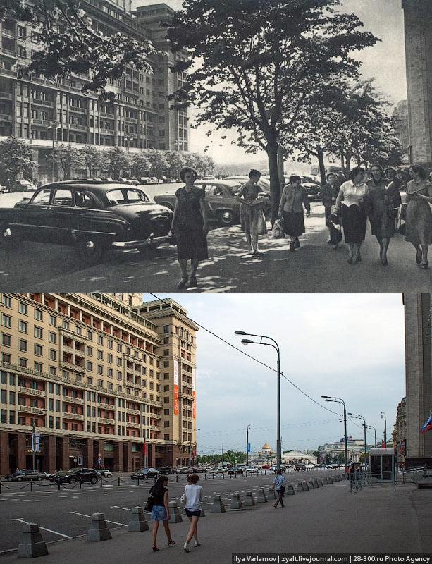 Moscow Trees: Then And Now