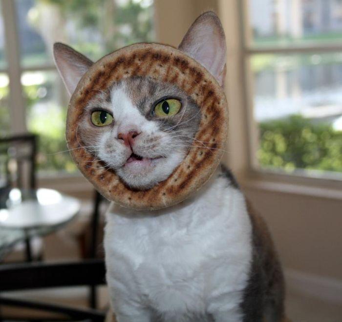 Bread on Cat
