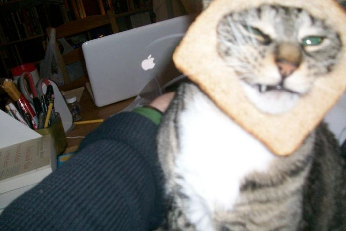 Bread on Cat