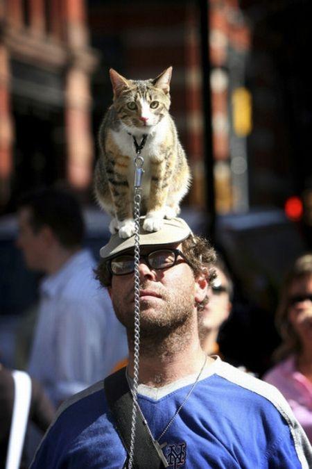 Cat Καπέλα