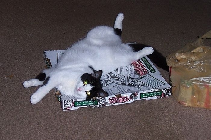 Cats Love Pizza Boxes