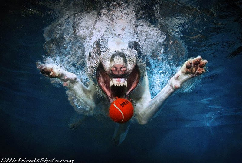 Underwater Рhоtоs оf Dogs Fetching Тhеir Ball