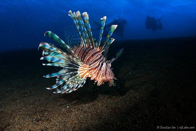 EunJae Im Underwater Photography