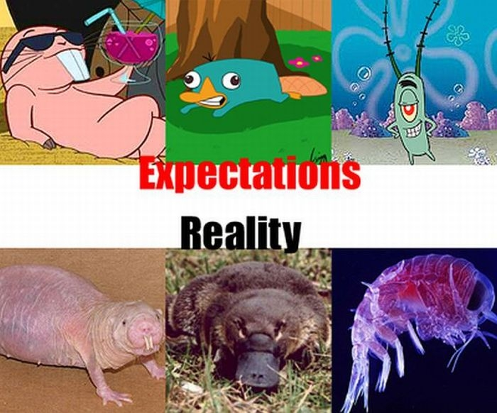 Expectations vs Reality
