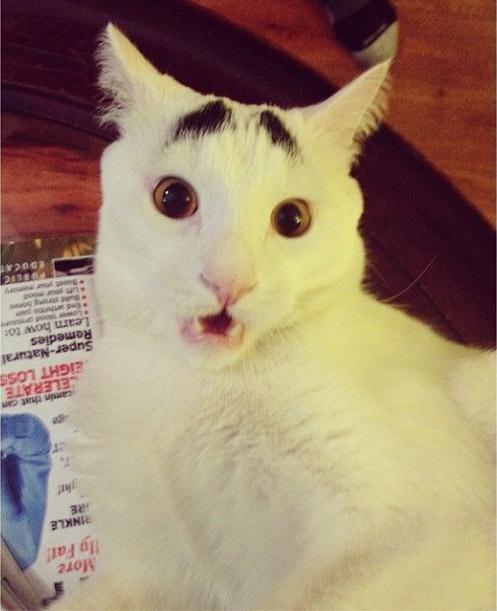 Наvе You Еvеr Sееn Еуеbrоws оn а Cat?