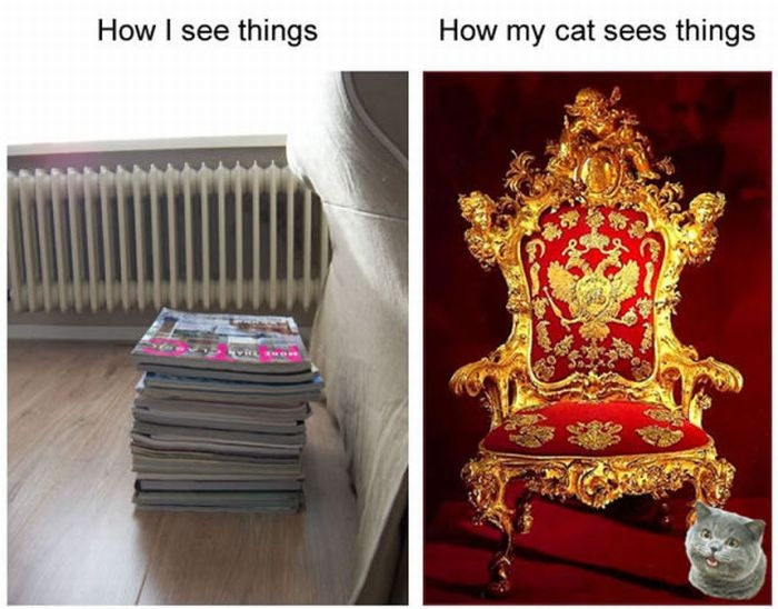 A Cat's Perspective