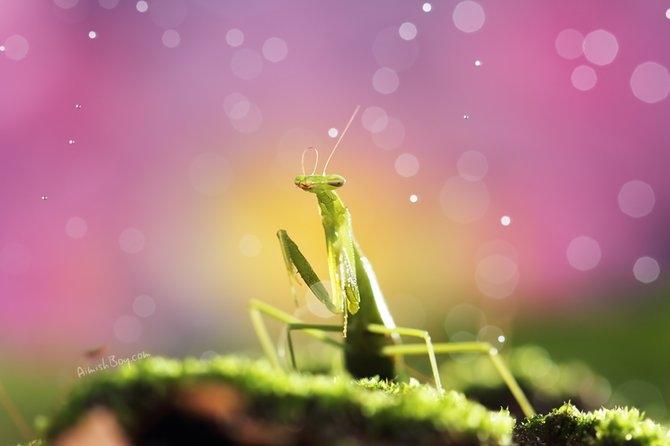 Wonderful Macro Shots By Nadav Bagim