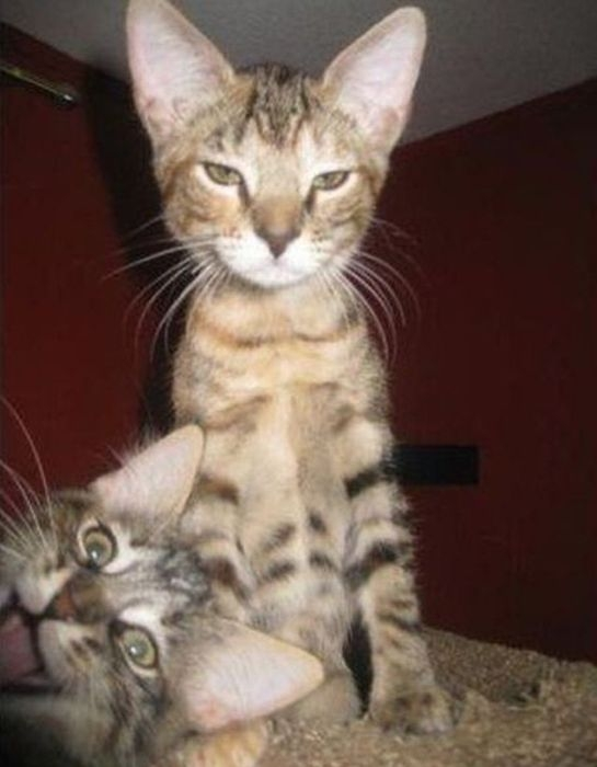 Animal Photobombers