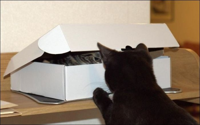 One Box Two Cats
