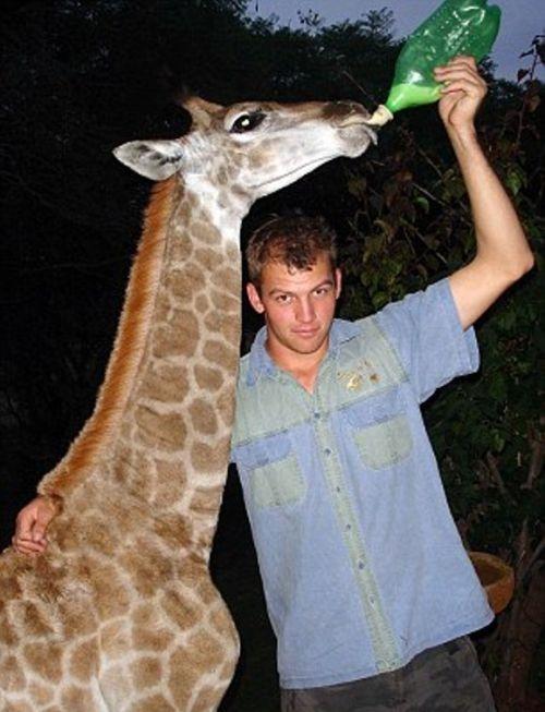 Pet Giraffe