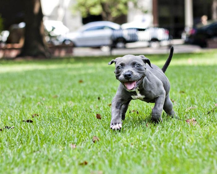 Rescued Deformed Puppy Learns to Walk
