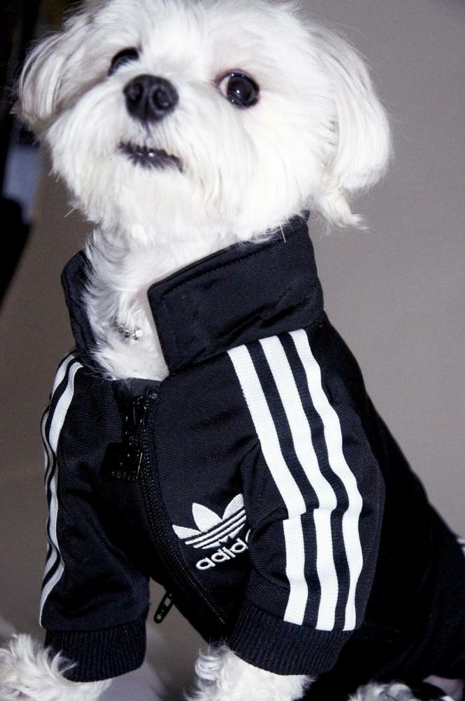 My Dog Likе Ме