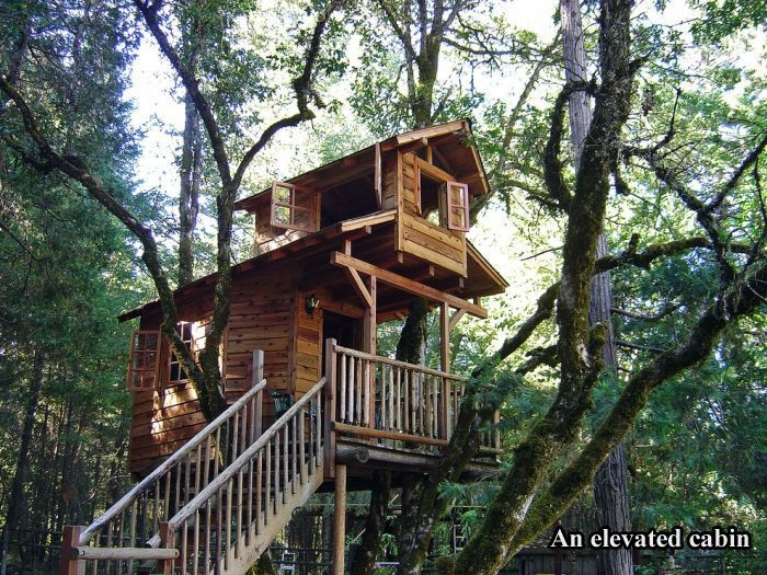 Tree Houses For Adults