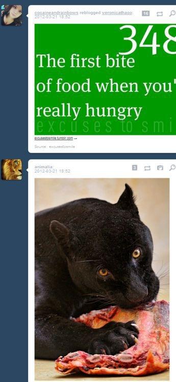 Fun with Tumblr