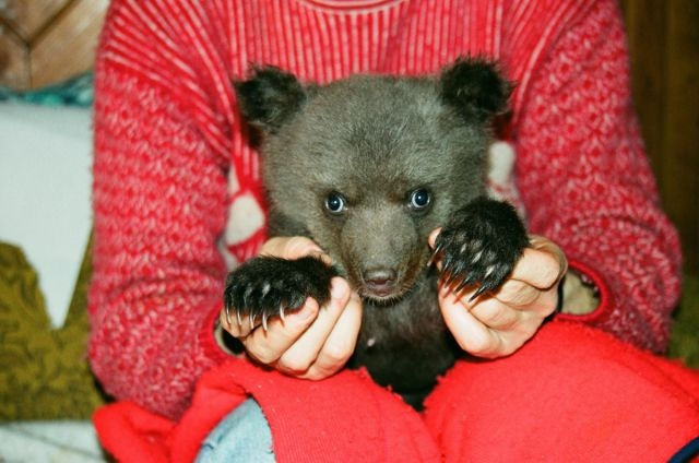 The Woman Who Adopted a Bear Cub