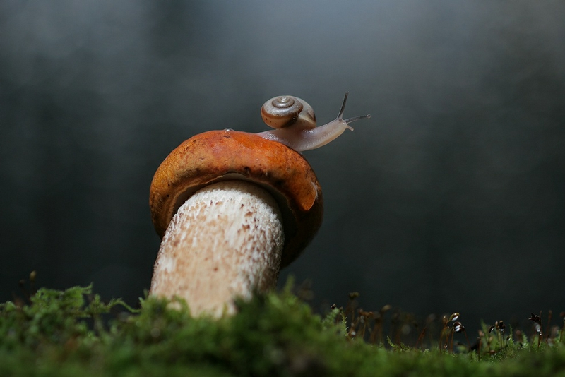 Macro World of Snails And Insects