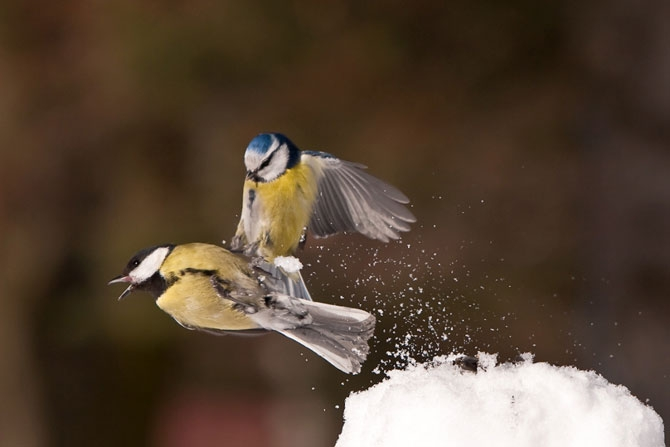 Wild Nature of Russia 2012