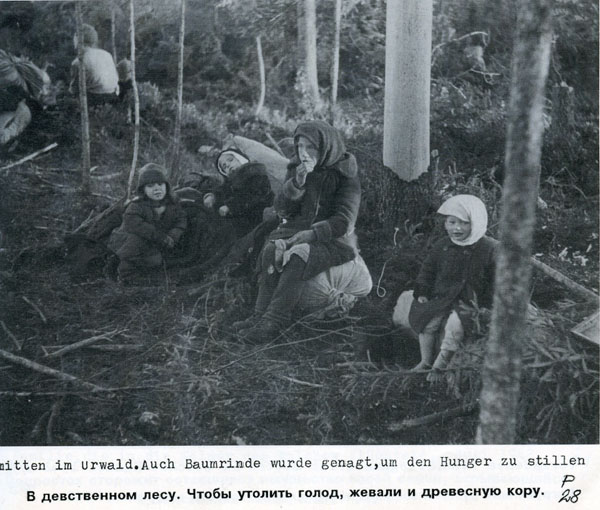 Battle in Volkhovsky Forest (World War II) 14