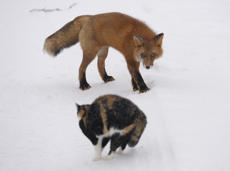 Defender cat 3