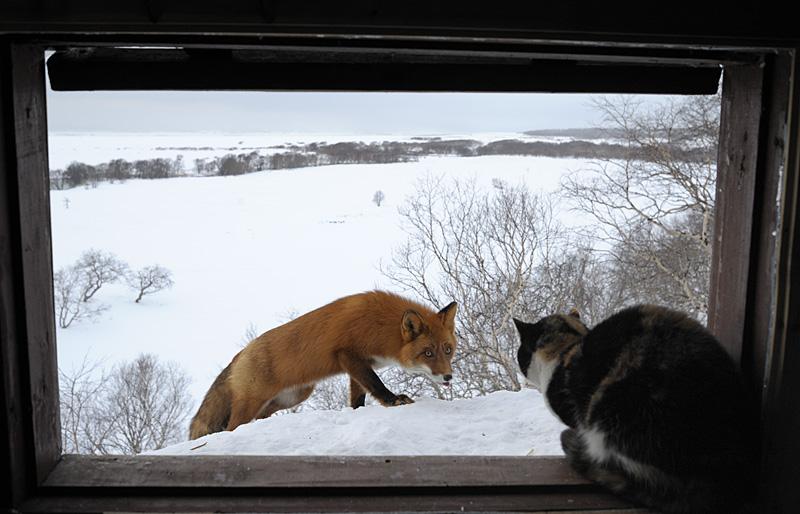 Defender cat 5