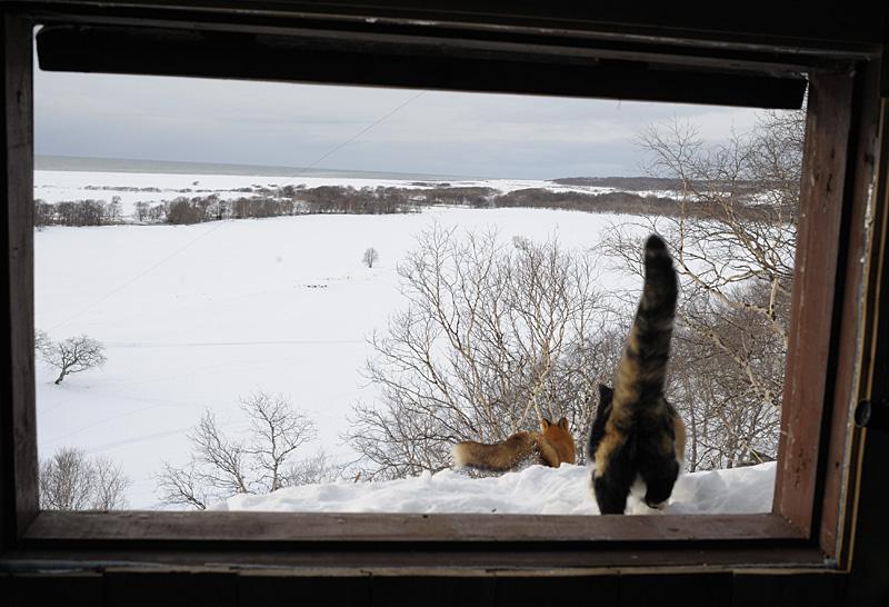 Defender cat 6