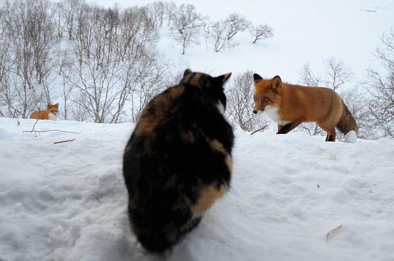 Defender cat 7