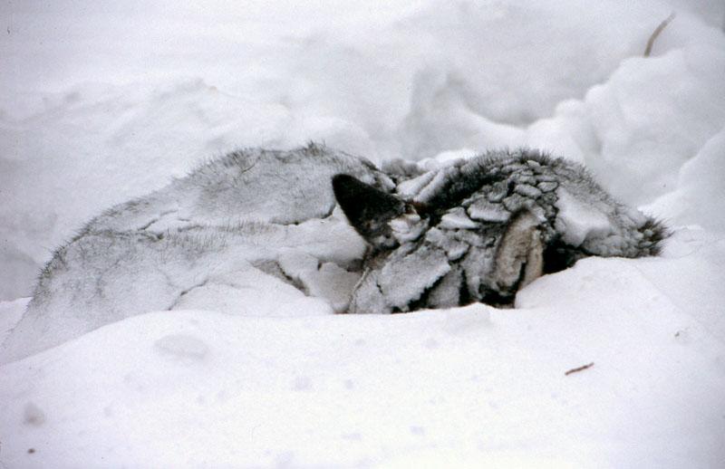 Kamchatka 10