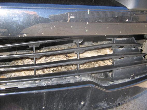 coche liebre car hare