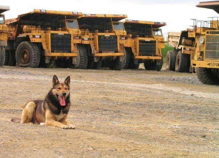 abandoned heavy trucks, komatsu, caterpilar, cat 2