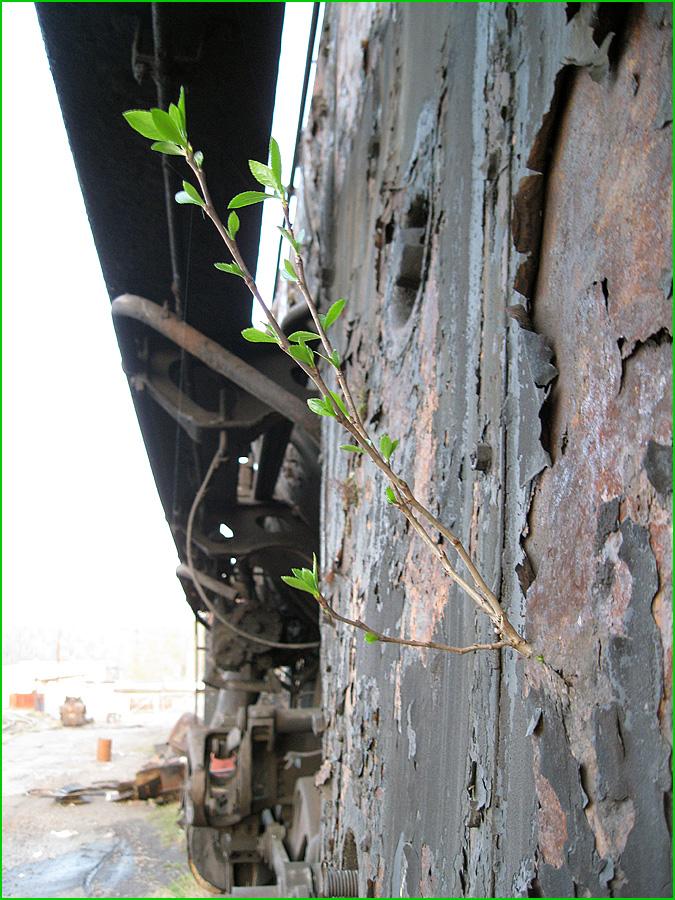 Abandoned Locomotives 12