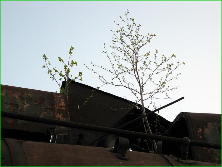 Abandoned Locomotives 17