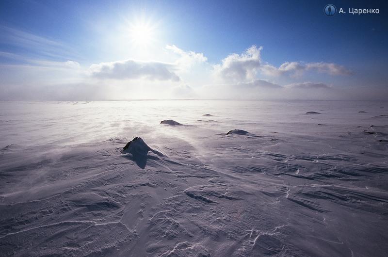 An Expedition To an Arctic Desert