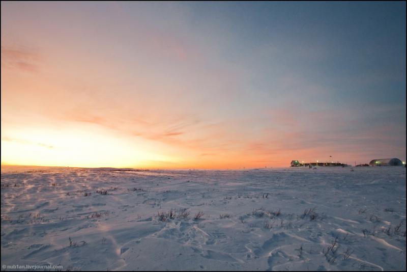 Back to the Arctics
