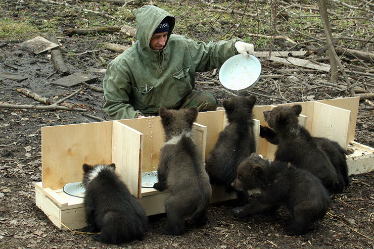 Russian bear growers 14