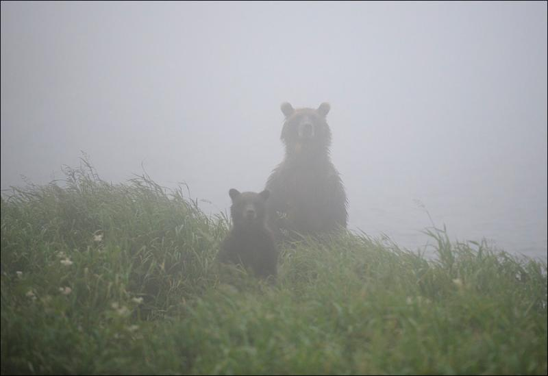 Bears In Fog 1