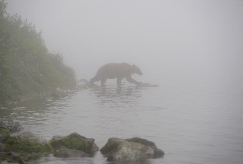 Bears In Fog 2