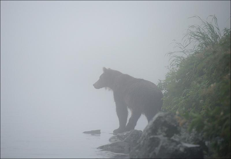 Bears In Fog 3