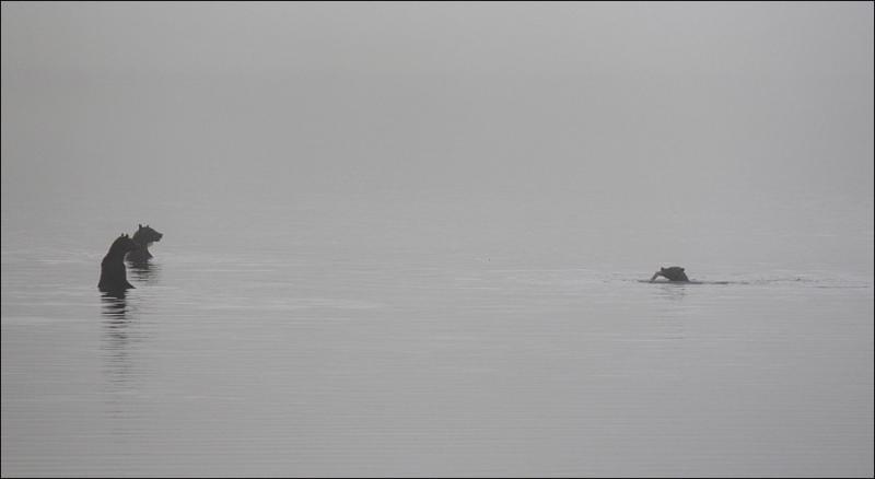 Bears In Fog 5